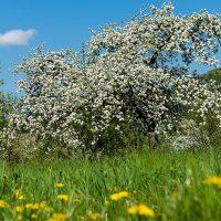 Sonderaktion zum Scheinfelder Frühlingsmarkt